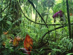 jungle_0